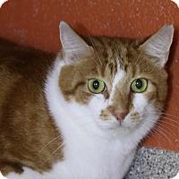 Adopt A Pet :: Morris - Sarasota, FL