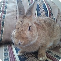 Adopt A Pet :: Alvin - Watauga, TX