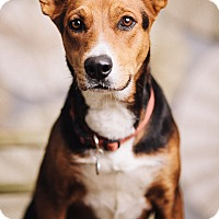 Adopt A Pet :: Samantha - Portland, OR