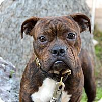 Adopt A Pet :: Derby - Los Angeles, CA