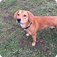 Adopt A Pet :: Cooper - Round Lake Beach, IL