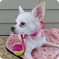 Adopt A Pet :: Maisy - Baton Rouge, LA