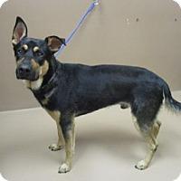 Adopt A Pet :: HOPPER - Reno, NV