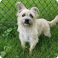 Adopt A Pet :: Dixie Chic - Westminster, MD