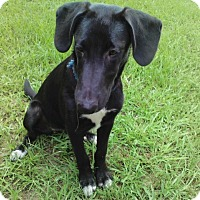 Adopt A Pet :: Artie - Ellaville, GA