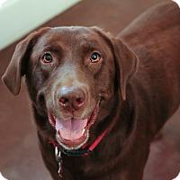 Adopt A Pet :: Coco - San Antonio, TX