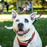 Adopt A Pet :: Punky~meet me! - Glastonbury, CT