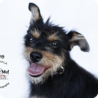 Adopt A Pet :: Olive - Castaic, CA