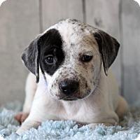 Adopt A Pet :: Garth - Waldorf, MD