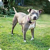 Adopt A Pet :: Gabby - Harrisburg, PA
