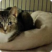 Adopt A Pet :: Bingo - Sewaren, NJ
