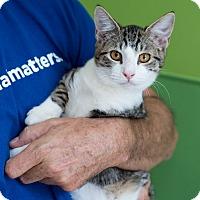 Adopt A Pet :: Ramon - Houston, TX