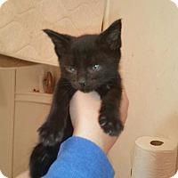 Adopt A Pet :: Blueberry - Tumwater, WA