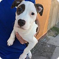 Adopt A Pet :: Manuela - New Orleans, LA