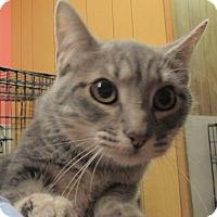 Adopt A Pet :: R.J. - Reeds Spring, MO