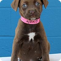Adopt A Pet :: Lizzie - Waldorf, MD