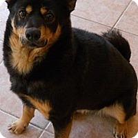 Adopt A Pet :: chelsea - dewey, AZ