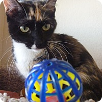 Adopt A Pet :: Little Momma - Fountain Hills, AZ