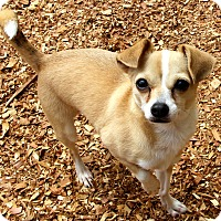 Adopt A Pet :: Ringo - Hagerstown, MD