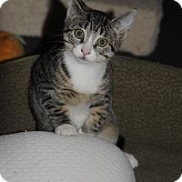 Adopt A Pet :: Carter4