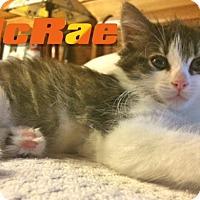 Adopt A Pet :: MacRae - McDonough, GA