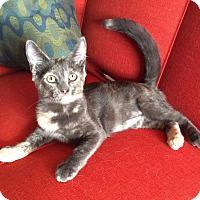Adopt A Pet :: Pamela - Brooklyn, NY