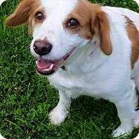 Adopt A Pet :: Sandy - ROME, NY
