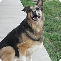 Adopt A Pet :: Rickie - Buffalo, WY
