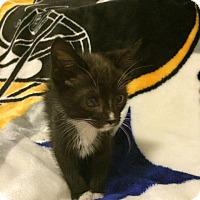 Adopt A Pet :: Rowdy - East McKeesport, PA