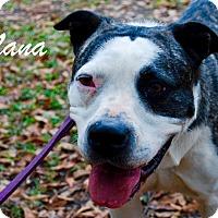 Adopt A Pet :: Nana - Daleville, AL