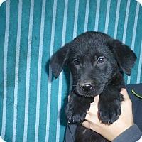 Adopt A Pet :: Charley - Oviedo, FL