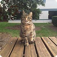 Adopt A Pet :: Missy - Charlotte, NC