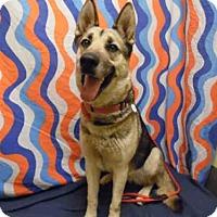Adopt A Pet :: *STELLA - Upper Marlboro, MD