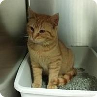 Adopt A Pet :: Reid - Maquoketa, IA