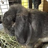 Adopt A Pet :: Fonzie - Woburn, MA