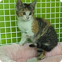 Adopt A Pet :: Amy - San Antonio, TX
