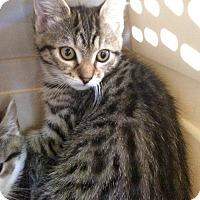 Adopt A Pet :: Ash #2 - Lunenburg, MA