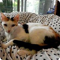 Adopt A Pet :: Therese - Tyler, TX