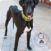 Adopt A Pet :: Pepper - Huntersville, NC