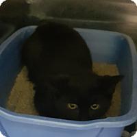Adopt A Pet :: Dante - Cody, WY