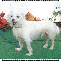 Adopt A Pet :: CONI - Marietta, GA
