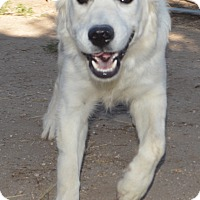 Adopt A Pet :: Buddy - Peyton, CO