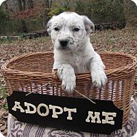 Adopt A Pet :: Adams - Providence, RI