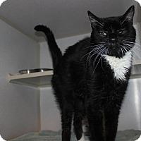 Adopt A Pet :: #412 Buster - Granite City, IL