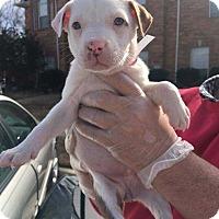 Adopt A Pet :: Huff - Allen, TX