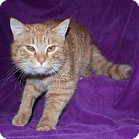 Adopt A Pet :: Sparrow - Ortonville, MI
