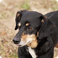 Adopt A Pet :: Rowdy - Maynardville, TN