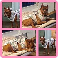 Adopt A Pet :: Mavis - Summerville, SC