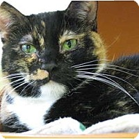 Adopt A Pet :: Lorna Doone - Chicago, IL