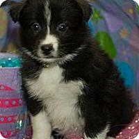Adopt A Pet :: Polar - Saskatoon, SK